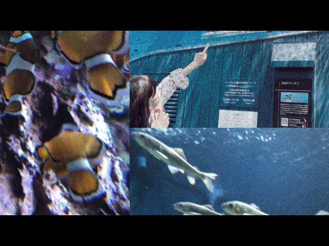 【35s VLOG】水族館🐟